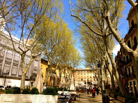 One of my favourite features of Palma is the archway of trees as it gives the city the ideal combination of luscious green nature without having to sacrifice the practicality of the shops and cafes.